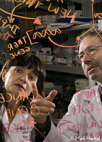 Maria Castro, PhD, and Pedro Lowenstein, MD, PhD
